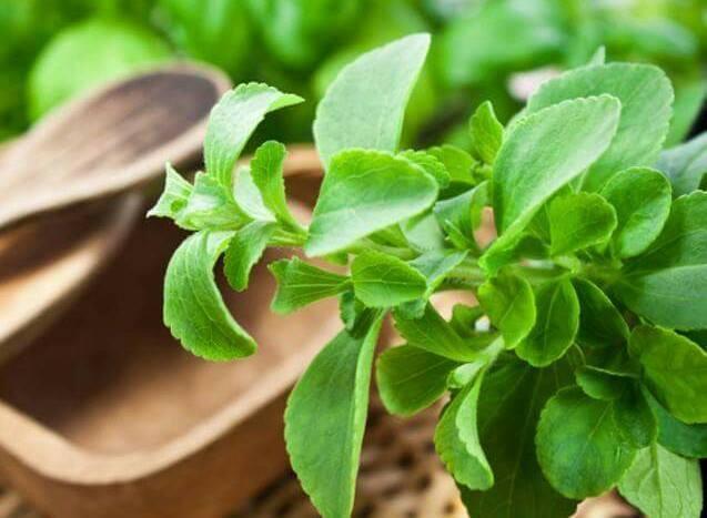 adoçante-stevia