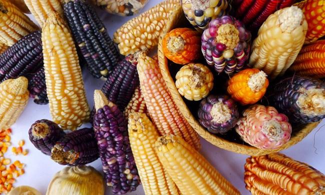 milho peruano
